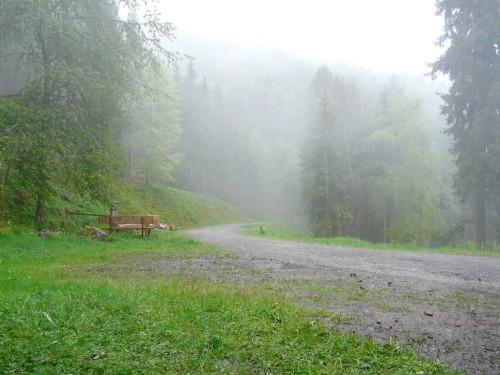Nebelschwaden steigen im Regen auf